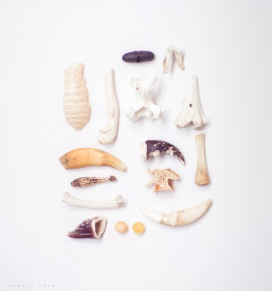 litle bones, mammal teeth and fish eyes